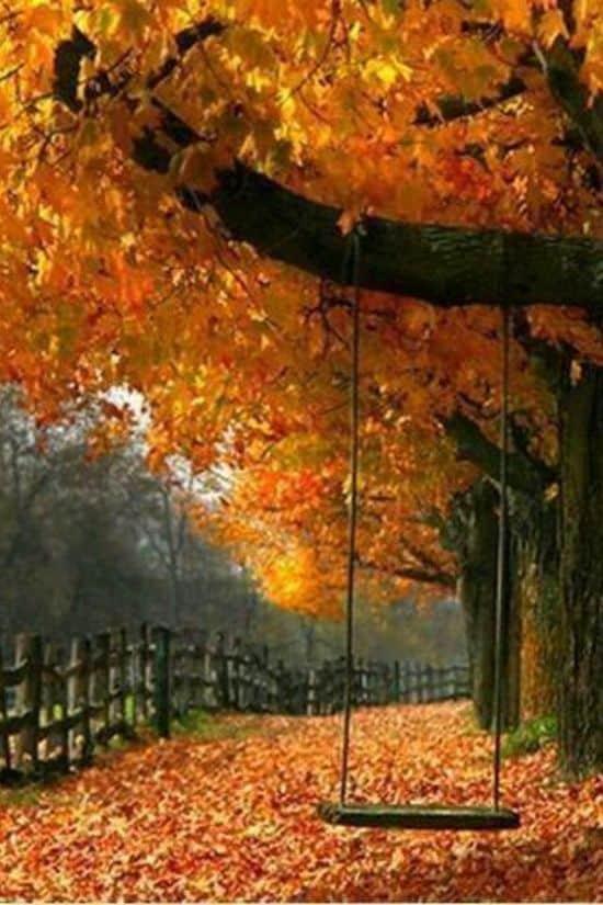 fantastic fall view