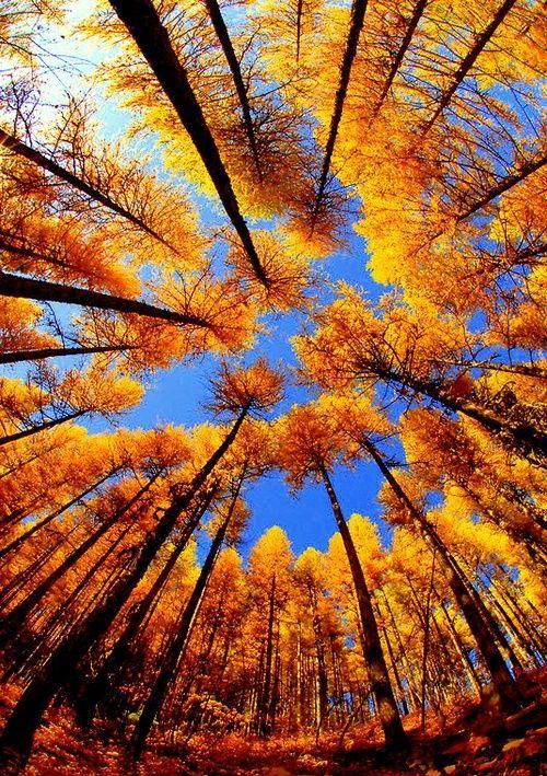 Fantastic Fall Shot