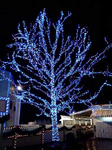 how to wrap your trees in lights
