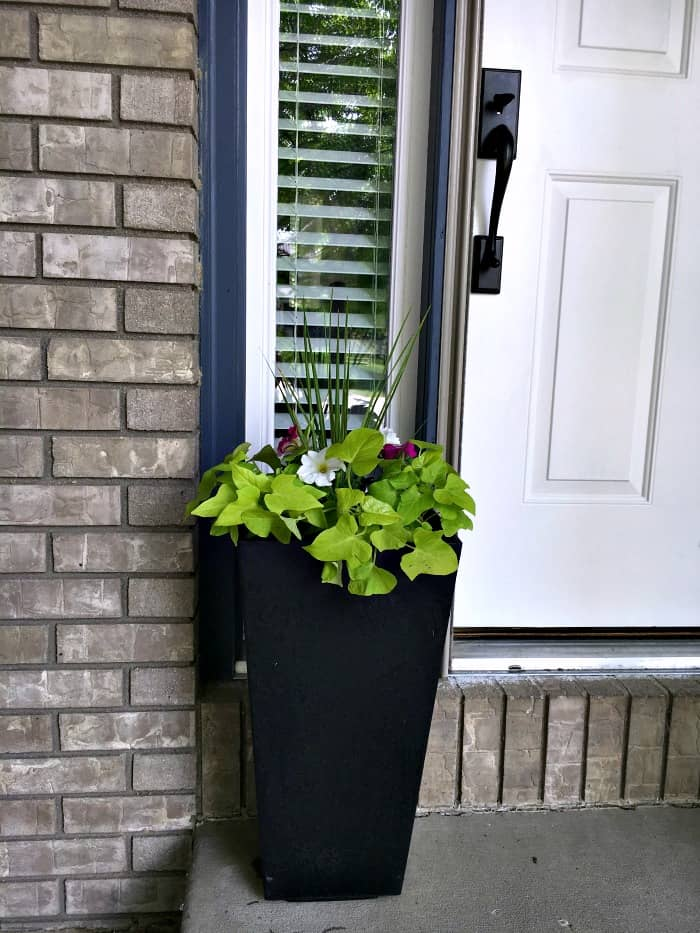 container garden tutorial for planting beautiful flowers at the front door
