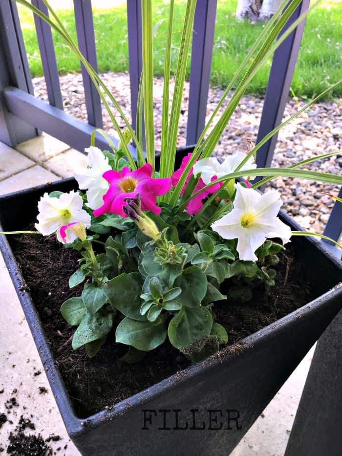 container garden tutorial with filler