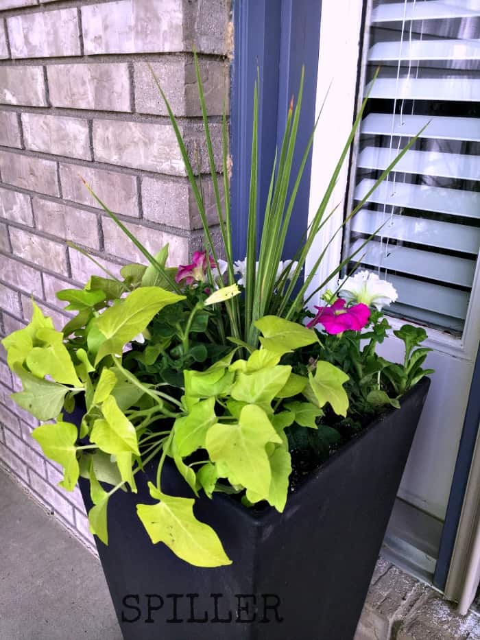 container garden tutorial with spiller2