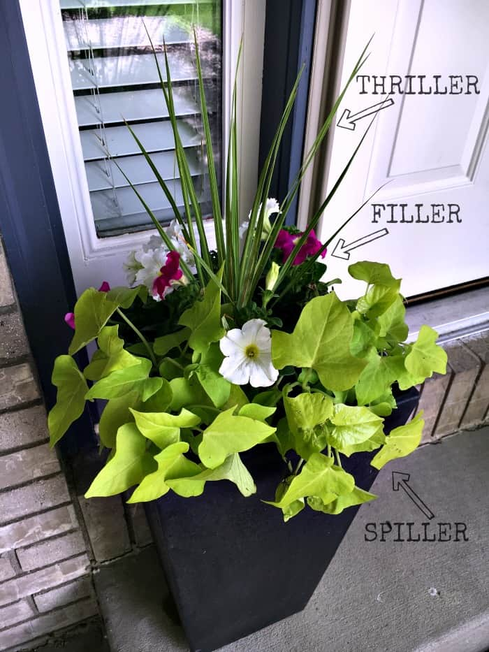 container garden tutorial with thriller, filler, spiller method
