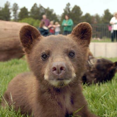 Bear Country USA Badlands South Dakota