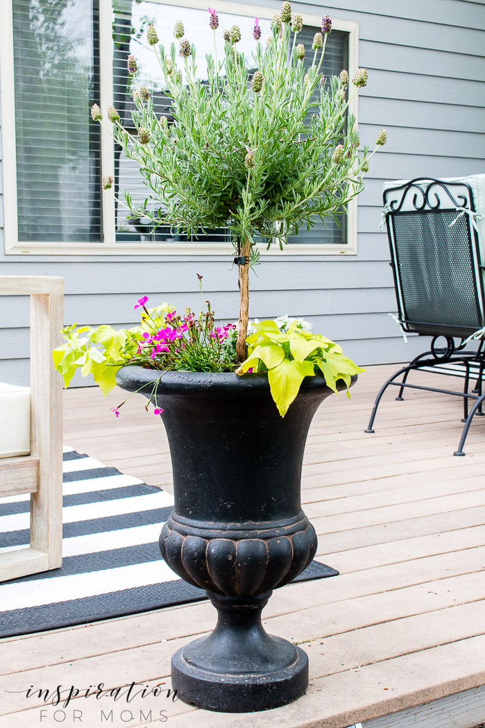 backyard patio garden urn with lavender plant