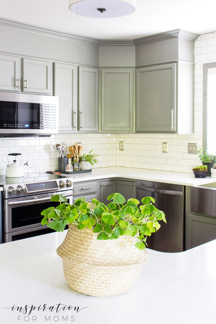 kitchen with gray cabinets and green plant on counter