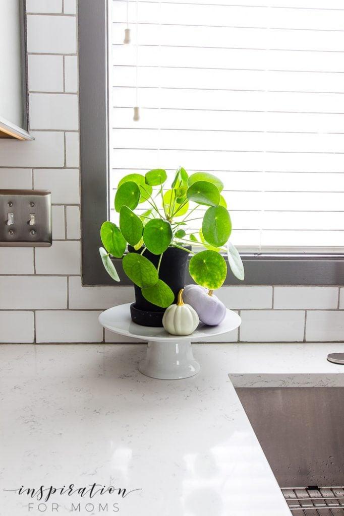 money plant in kitchen, white subway tile