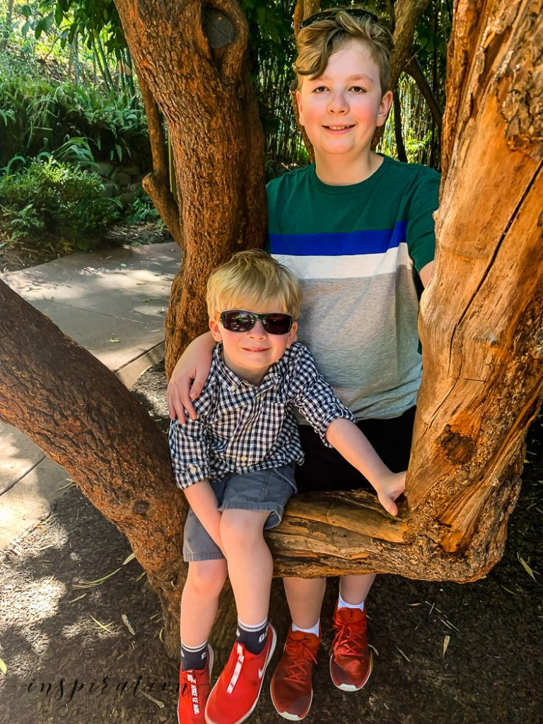 San Deigo family vacation to the zoo