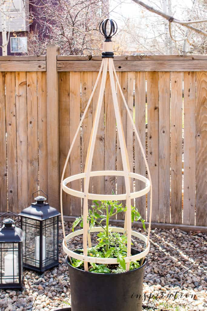 Grow the container garden of your dreams with this diy planter trellis. Perfect for tomatoes or any vining plant! #plantertrellis #trellis