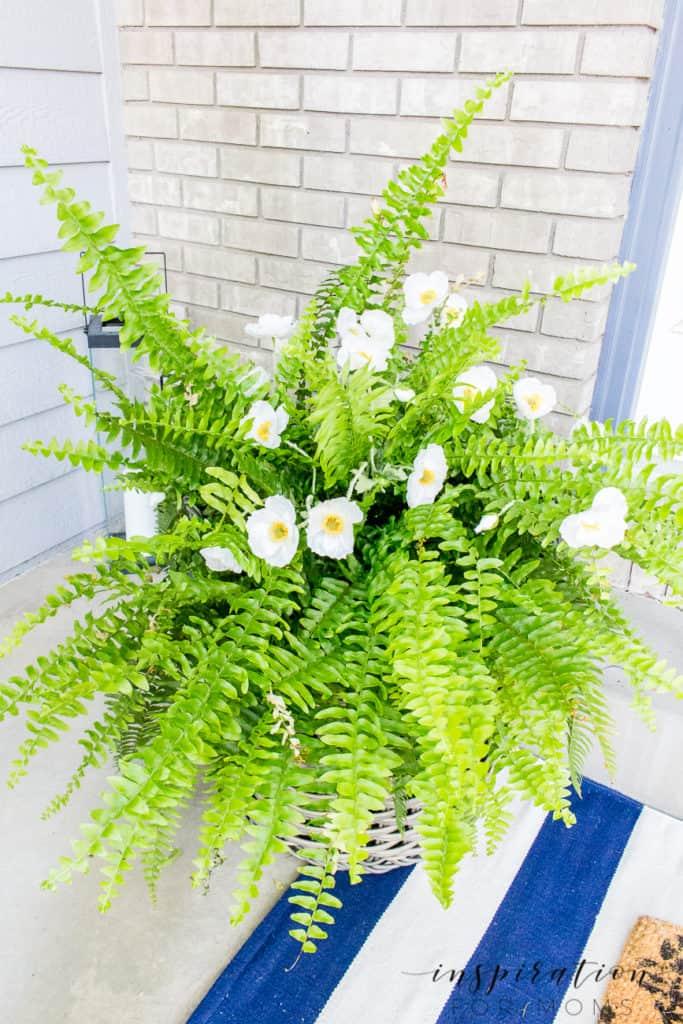 Boston fern with white poppy flowers in basket flanking front door